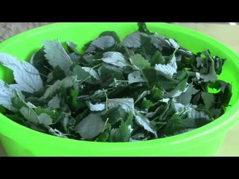 Чай из листьев малины,вишни,клубники и т д