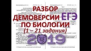 ДЕМОВЕРСИЯ ЕГЭ ПО БИОЛОГИИ 2019 ( 1-21 задания)