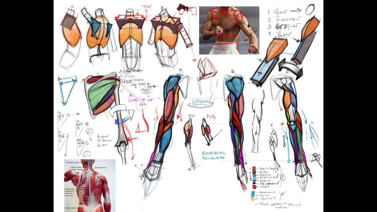 Drawing Dynamic Hands Pdf