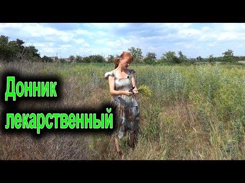 Донник лекарственный – описание, выращивание, полезные