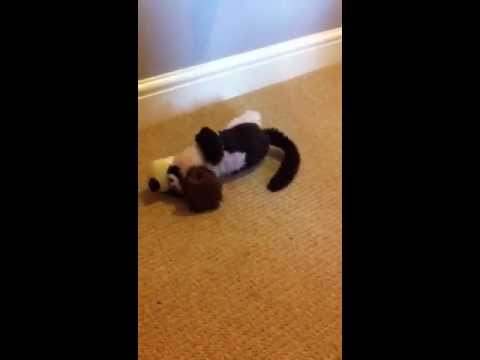 Cracker Barrel Laughing Dog Toy Youtube