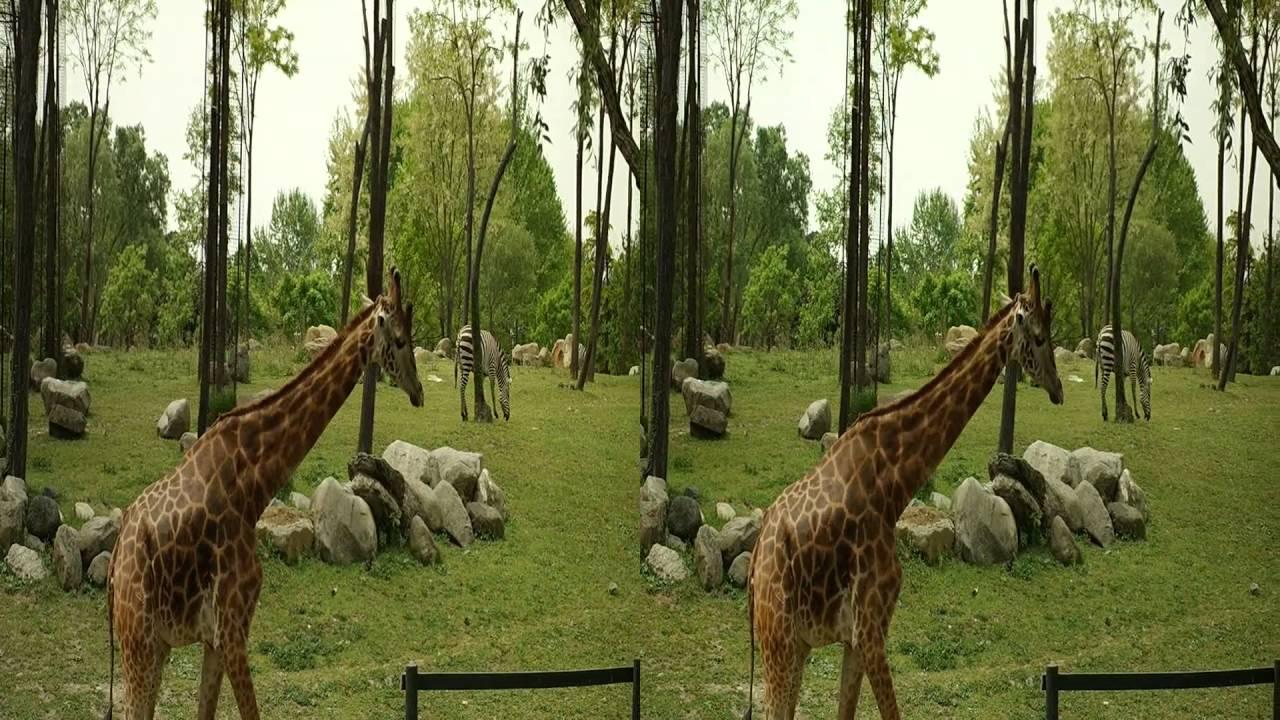 3D video hayvanlar alemi, 3d video animal kingdom