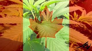 Cannabis grower gets  $40 million worth of tax breaks