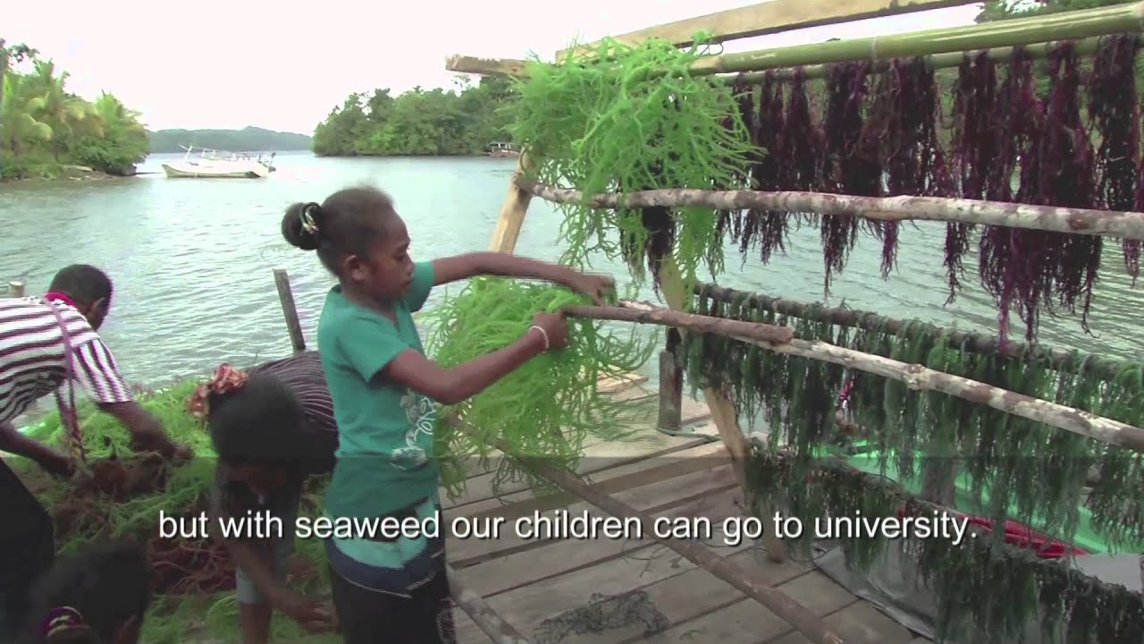 Indonesia: Saved by seaweed