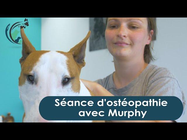Ostéopathie avec Murphi   Clinique vétérinaire Saint Roch