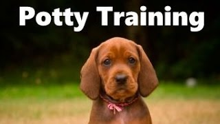 How To Potty Train A Redbone Coonhound Puppy - House Training Redbone Coonhound Puppies Fast & Easy