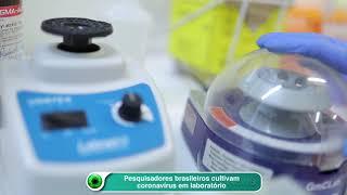 Pesquisadores Brasileiros Cultivam Coronavírus Em Laboratório