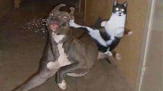 ПРИКОЛЫ С ЖИВОТНЫМИ Смешные Животные Собаки Смешные Коты Приколы с котами Забавные Животные 90