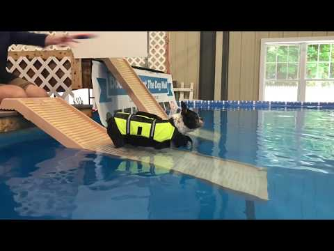 Canine Swimming @ The Dog Mall