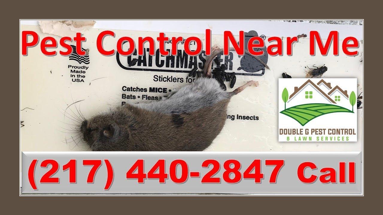 Pest Control Near Me Hannibal Missouri