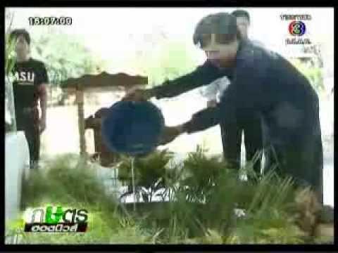 เกษตร Hotnews ช่อง 3  นำเสนอข่าว การใช้สารสกัดประคำดีควาย กำจัดหอยเชอรี่ในนาข้าว