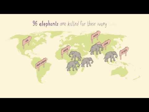 Help STOP illegal wildlife trade