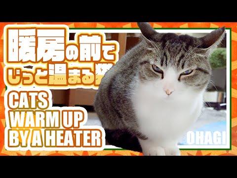 暖房の前でじっと温まる猫と「」