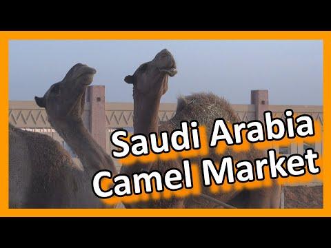Saudi Arabia - Riyadh Camel Market