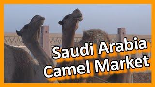 saudi arabia riyadh camel market
