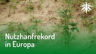 Nutzhanfrekord in Europa   DHV News #122