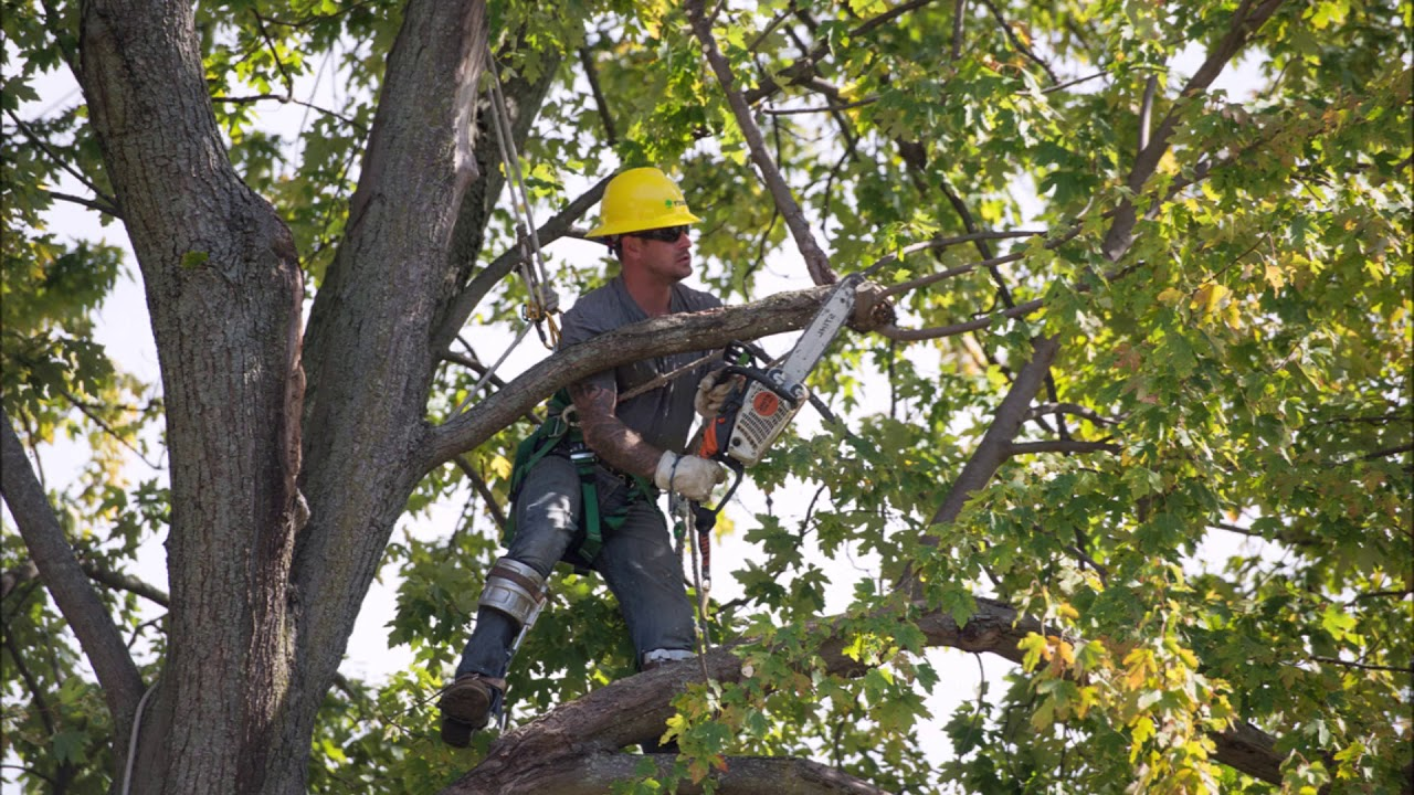 How Much Does Tree Branch Removal Junk Removal Cost In ...