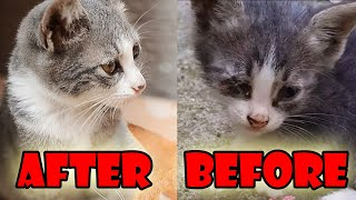 Street Cats - Before and After 3 Months