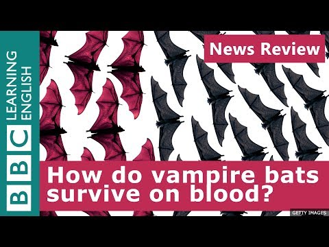 BBC News Review: How do vampire bats survive on blood?