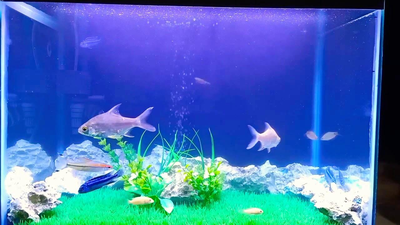 Aquarium Rumput Sintetis Youtube Rumput sintetis untuk aquarium