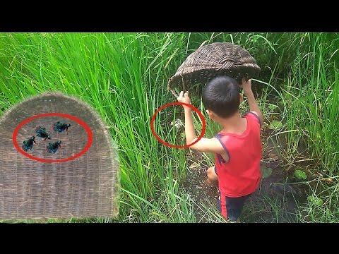 Net Fishing (Betta) - How to Net Betta || Kampot Province ; CAMBODIA
