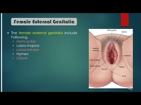 10 SECRET VAGINA FACTS from YouTube · Duration:  3 minutes 41 seconds