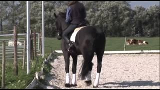 Instructie Dressuur Saskia Meinema Rex training deel 2