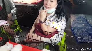 [콘캔] 충격!! 태국시골야시장!! 뱀,강아지,흑염소,…
