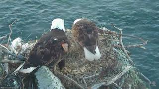 03-18-18 Two Harbors eagles; bonding and nestorations.