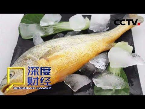 《深度财经》 节日餐桌新彩头 大黄鱼的养殖与价值 20190216 | CCTV财经