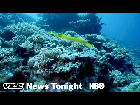 Australians Can't Agree On How To Save The Great Barrier Reef (HBO)
