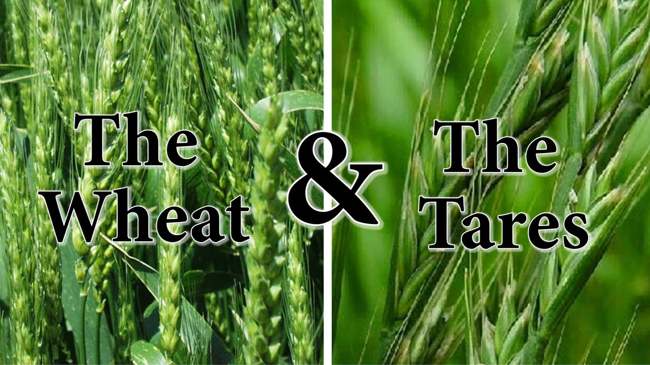 Quot The Wheat Amp The Tares Quot Youtube