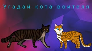 Угадай кота воителя по окрасу из Вики