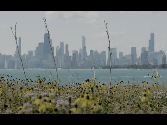Birds on Film - Great Lakes Now - 1026 - Web Extra