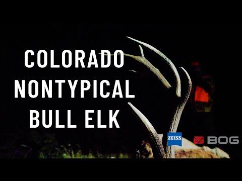 Colorado Non-Typical Bull Elk - Pete Angle