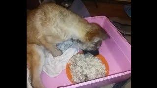 Немного обо всём  Мою миски, готовлю кашку для собак, кошек и Рыжули