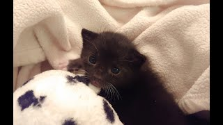 Tiny kitten found in trash bag ready for adoption