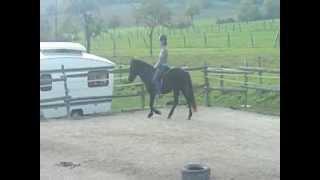 Monique riding Regina the Icelandic Horse