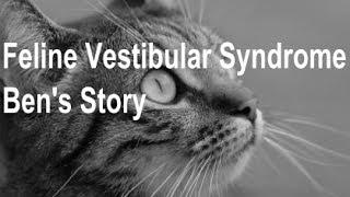 Feline Vestibular Syndrome  Ben's Story