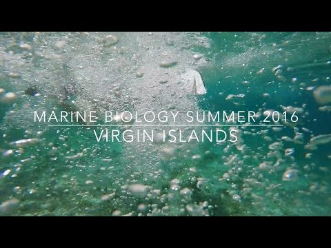 Marine Biology Summer 2016