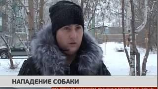 Нападение собаки. Новости. 13/02/2017. GuberniaTV