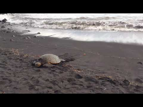 Frozen Turtle Gets Melted in Hawaii