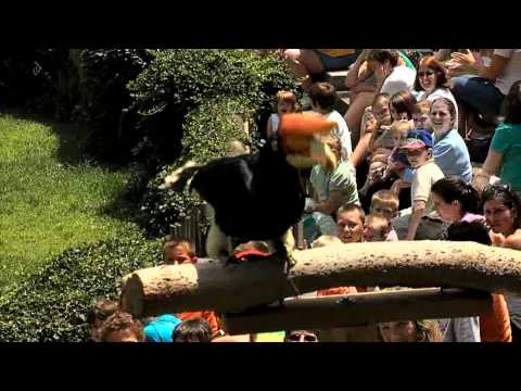 Cincinnati USA 2012 Summer TV CAmpaign - Cincinnati Zoo