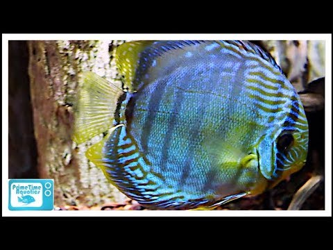 Huge South American Fish Tank Biotopes (and A BONUS Lake Tanganyika Fish Tank)!