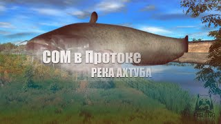 Русская Рыбалка 4 Russian Fishing 4 Сом в Протоке