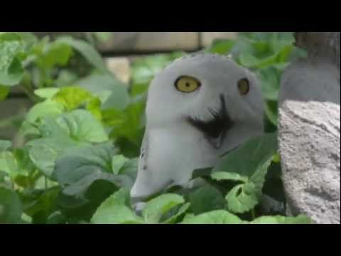 ORly? Owl!!!