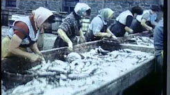 Shetland Fishing Industry early 1960's.  Archive film 94175