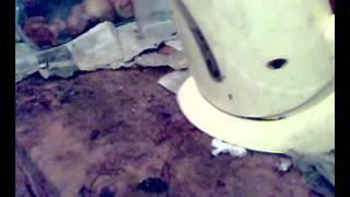 Ужас на кухне(Очень много страшных тараканов., 2014-01-13T18:44:47.000Z)