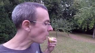 Le ver est dans la pomme- french expression