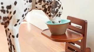 고양이 강아지 트레이 밥 물 그릇 높이 조절 식기 그릇…